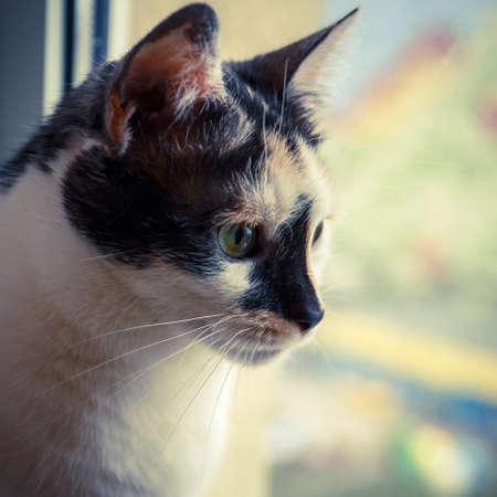 furred: portrait of a cat
