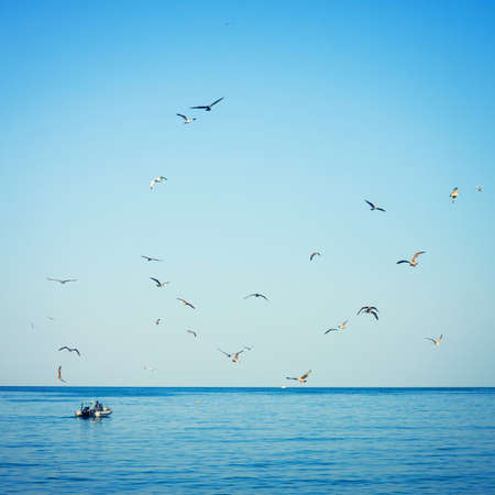 seagulls  followed by fishing boat Stock Photo