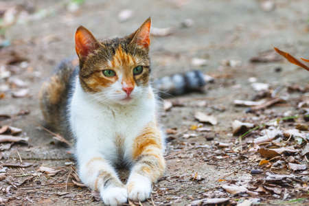 furred: cat lying on the ground