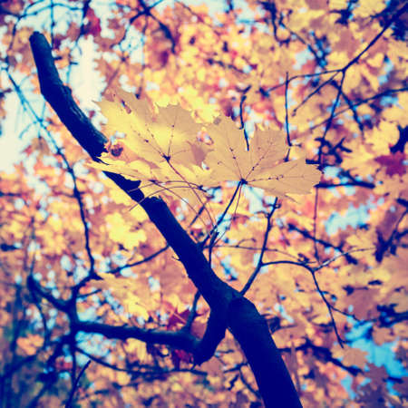vintage look: Colorful background of autumn leaf, vintage look Stock Photo