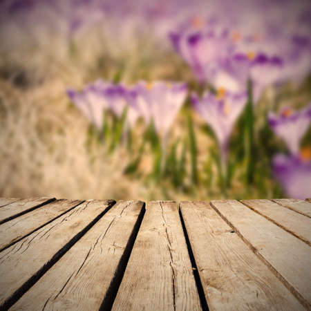 meadow full of crocuses and empty wooden deck table. Ready for product montage display Stock Photo