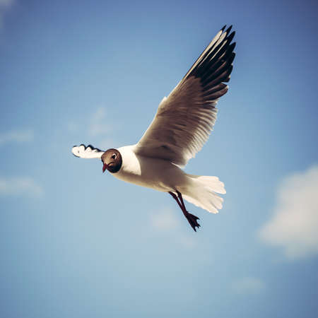 Flying seagull in the sky Stock Photo