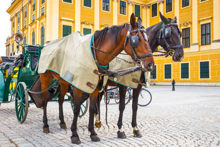 schoenbrunn: Horse carriages at main square of Schonbrunn Palace in Vienna , Austria Editorial