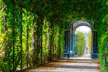 schoenbrunn: romantic garden walkway forming a green tunnel of acacias at Schonbrunn Palace in Vienna, Austria