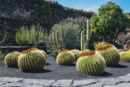 View of cactus garden, jardin de cactus in Guatiza, popular attraction in Lanzarote, Canary islands