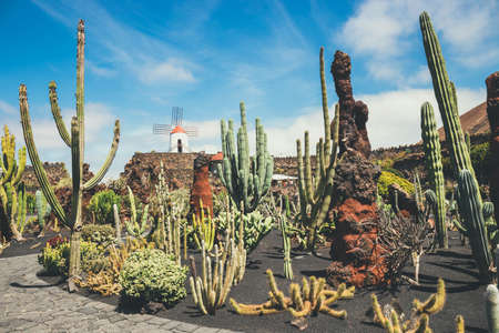view of cactus garden jardin de cactus in guatiza popular attraction in lanzarote - Jardn De Cactus