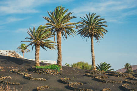 white wine: Volcanic landscape of Lanzarote, Canary Islands, Spain Stock Photo
