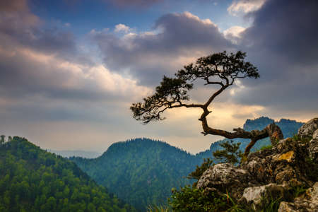 relic: Sokolica peak in Pieniny Mountains with a famous pine at the top, Poland
