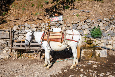 trecking: horse used to transport tired tourists in Samaria Gorge in central Crete, Greece Stock Photo