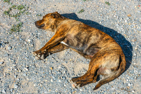 The dog lies on outside on the ground