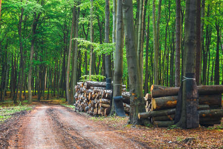 pile of wood in the green forest