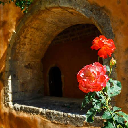 Beautiful roses in the pot,  Arkadi Monastery on Crete island, Greece