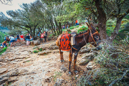 Crete, Lasithi, June 08, 2017: Donkey stands on the mountain path to  Zeus Cave (Diktaion Andron) - Lassithi, Crete, Greece