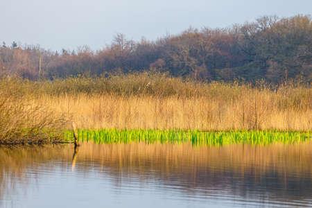 spring in a bird reserve in near Kolobrzeg, Poland Stock Photo