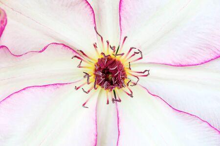 macro: Big pink flower macro