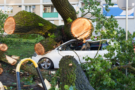 White passenger car crushed by fallen tree after severe storm Foto de archivo