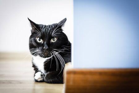 Black cat sitting around the corner looking at camera Stock Photo