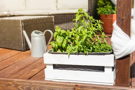 Pentola in legno bianco con erbe verdi su una terrazza in legno