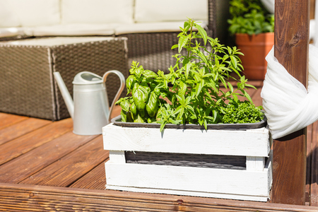 White wooden pot with green herbs on a wooden terrace Banque d'images