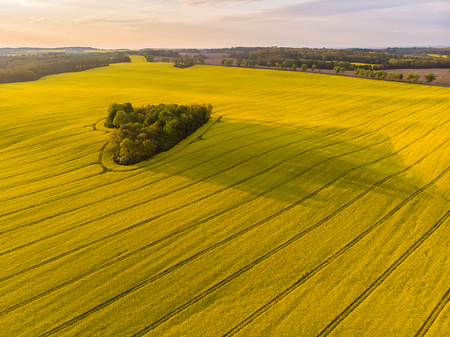 Heart of a nature, aerial view of distant heart shaped forest among yellow colza field at sunset