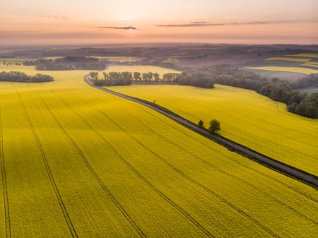 Aerial view of yellow canola field and country road at sunrise Stok Fotoğraf