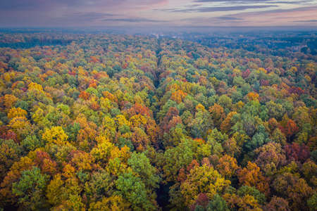 Aerial view of road through colorful autumn forest
