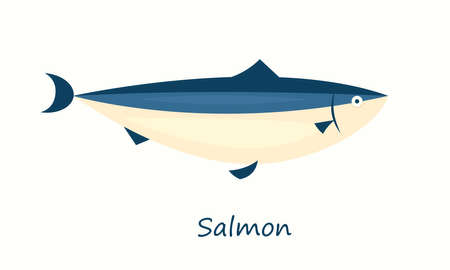 Salmon fish isolated