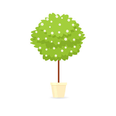 Decorative trimming outdoor plant tree in pot.