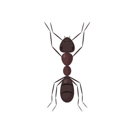 Brown ant top view. Vector illustration isolated on white background Illustration