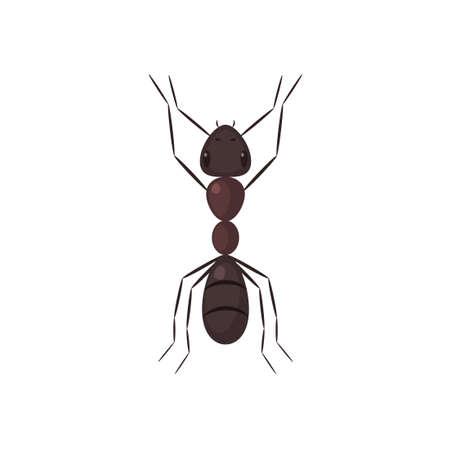 Vista superior de la hormiga marrón. Ilustración de vector aislado sobre fondo blanco.