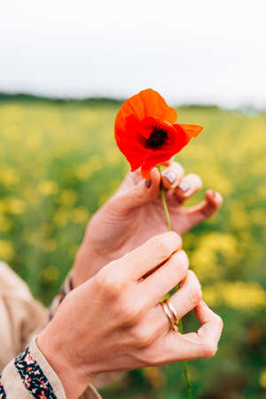 poppy flower on the hands of a caucasian woman