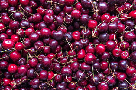 fresh cherries from ecological agriculture Standard-Bild