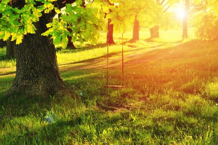 Een schommel op een boom in een dorp in de zomer. Zomer heldere stralen van de zon schijnen door de groene boom met een schommel. Zonnige dag van groene aard openluchtschommeling op grote boom.