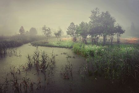 Cold autumn on marsh in foggy gray morning. Autumn landscape of wildlife on river. Trees in fog and bad cloudy weather. Sentimental melancholic landscape of cold morning on swamp.