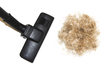 Vacuuming pet hair. Cleaning down with vacuum cleaner isolated on white background