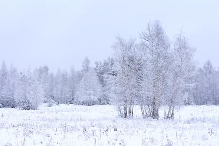 추운 서리가 내린 아침의 겨울 눈 덮인 풍경입니다. 숲의 가장자리에서 겨울 자연 스톡 콘텐츠