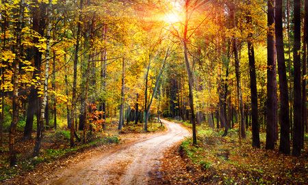 Autumn forest landscape on sunny bright day. Vivid sunbeams through trees in forest. Colorful nature at fall season Фото со стока