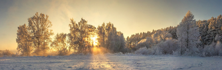 Panoramic winter landscape. Frosty nature in warm golden sunlight. Vivid sunbeams glows on trees covered hoarfrost. Beautiful winter morning. Amazing winter. Christmas and New Year background. Stock fotó