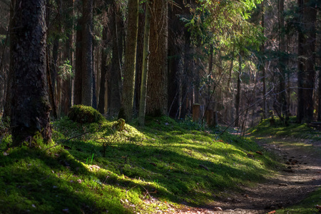 Wild summer forest. Green moss in forest. Trees in woodland Imagens