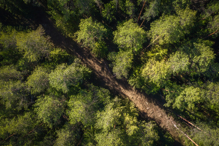Road in green forest aerial view. Pine trees view from above