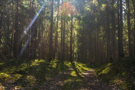 Summer forest. Green forest landscape. Road in wild woodland Imagens