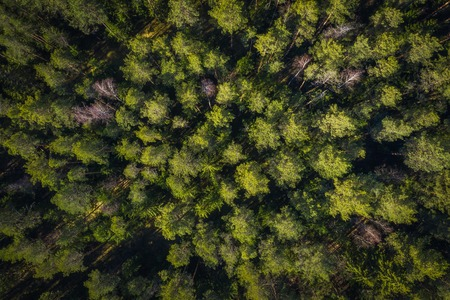 Forest drone view. Green trees in summer forest view from above.