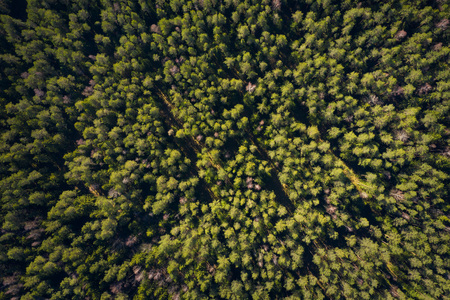 Forest background. Pine trees in green forest view from above. Summer forest aerial view Standard-Bild
