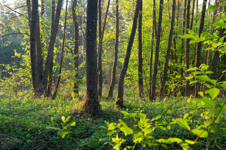 Summer green forest. Wild nature landscape. Trees in forest outdoor Stok Fotoğraf
