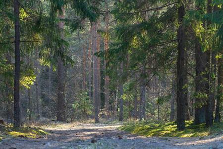 Summer forest. Wild woodland in sunlight. Forest nature landscape