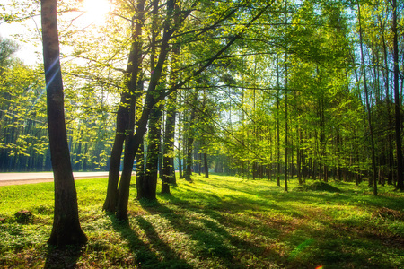 Summer landscape. Green trees in park in sunlight. Scenic nature background Stok Fotoğraf
