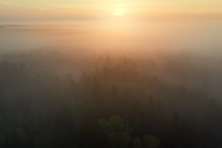 Bright sunrise over foggy forest. Misty forest in sunlight aerial view. Top view of mist in pine forest in sunshine Imagens