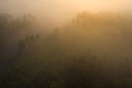 Foggy forest in sunlight aerial view. Misty Forest nature landscape at sunrise top view. Summer nature background