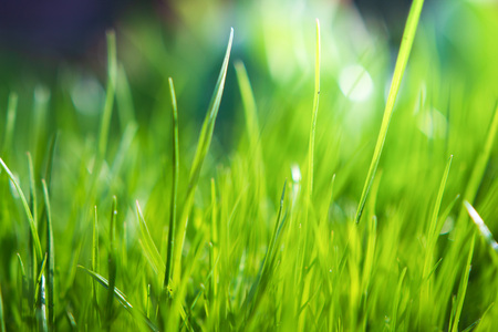 Green grass background. Summer background. Fresh morning nature meadow Imagens