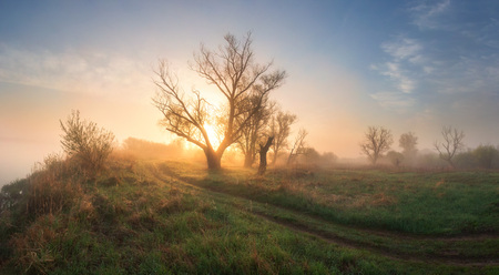 Spring landscape at sunrise. Sunny nature on foggy morning. Spring scenic background Imagens